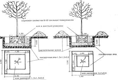 Схема посадки растений на участке фото