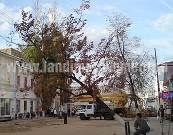 Удаление деревьев удаление аварийных